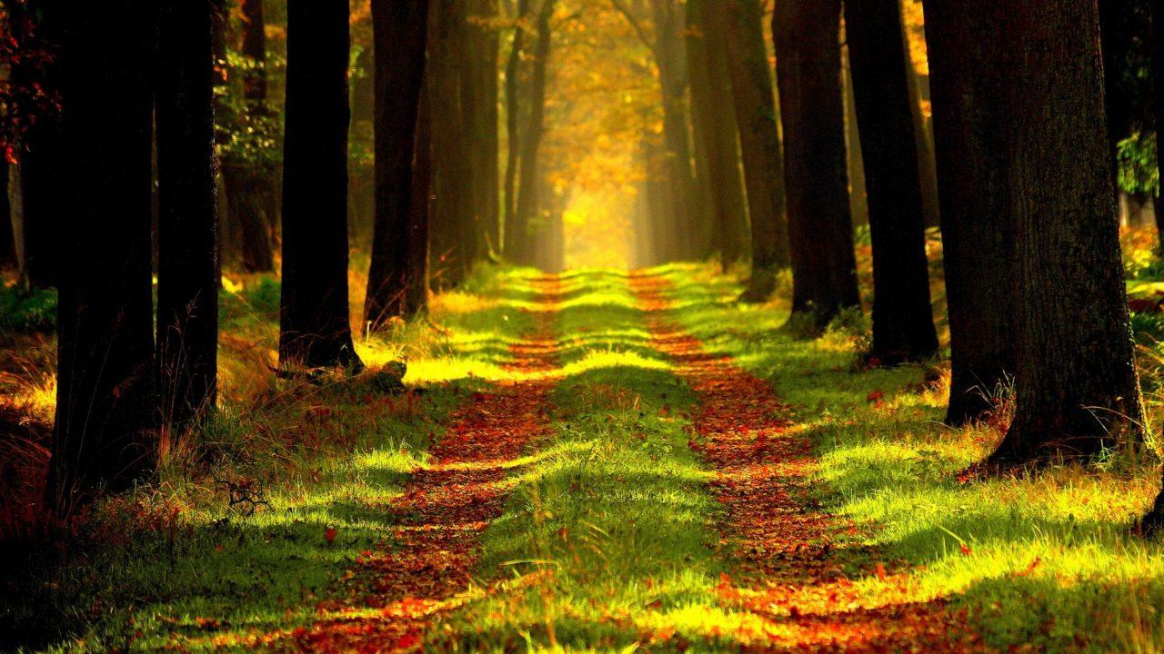 https://www.tkr-patrimoine.fr/wp-content/uploads/2020/11/Bois-et-forêts-gestion-de-patrimoine-TKR-1280x720.jpg