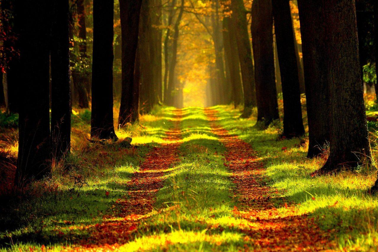 https://www.tkr-patrimoine.fr/wp-content/uploads/2020/11/Bois-et-forêts-gestion-de-patrimoine-TKR-1280x853.jpg